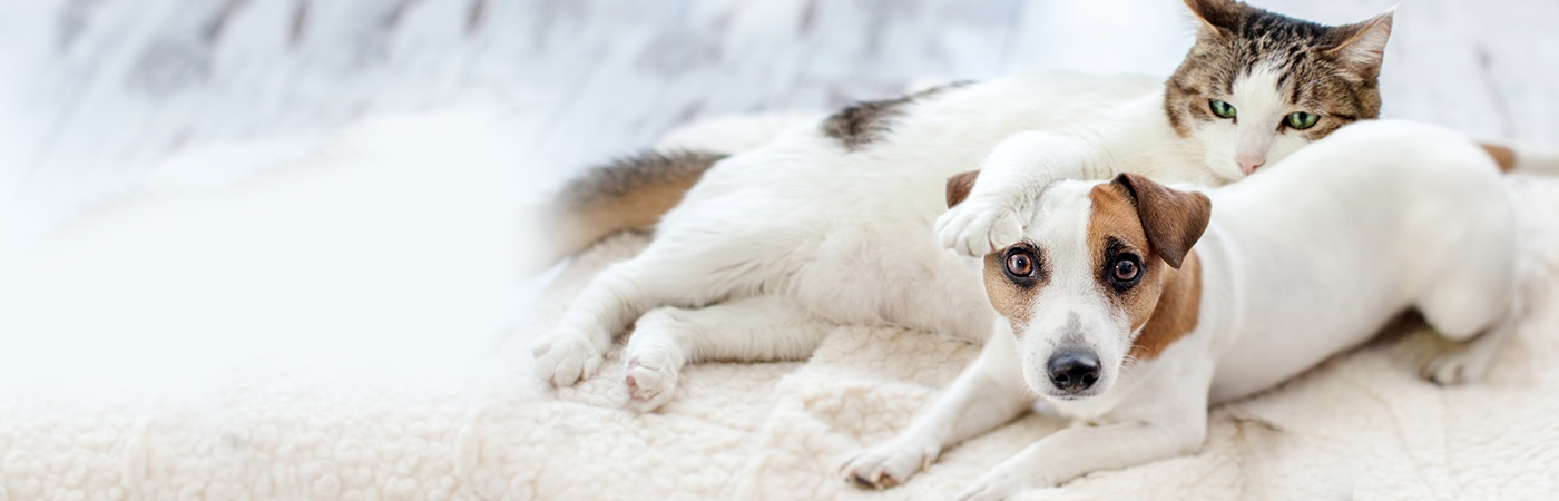 insurance - pet - resources - images - cat and white dog lying 1400 x 450 image